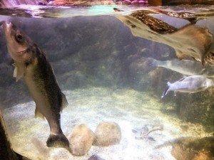 Fish at Sea life
