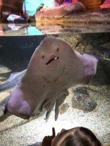 Sea life and its ray tank