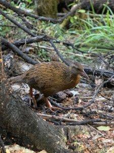 Neuseeland Vögel